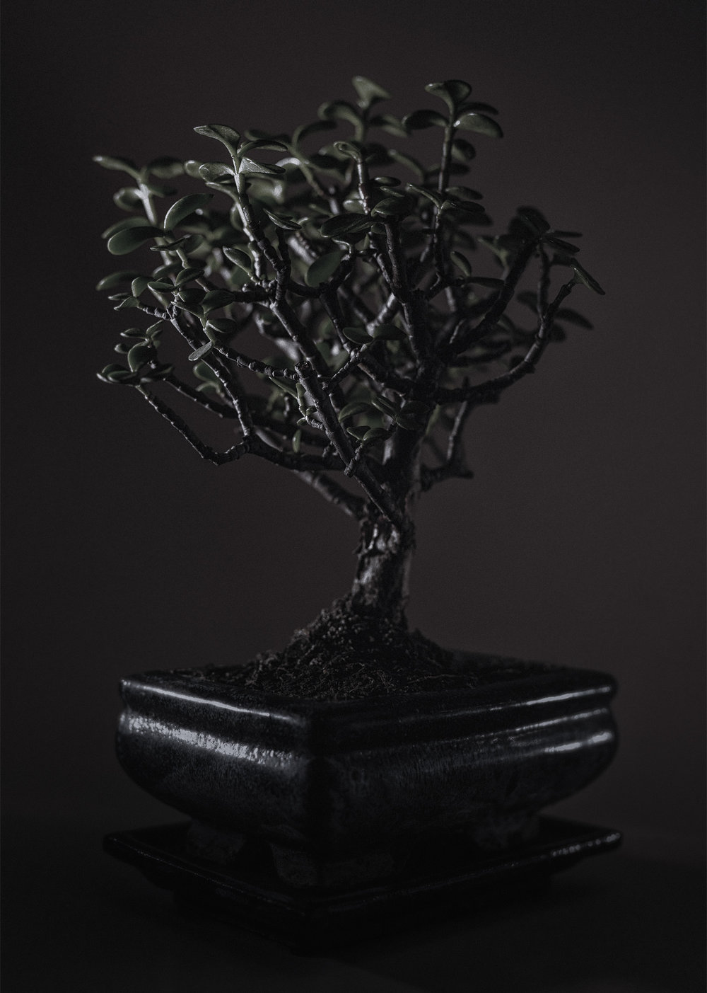 Bonsai at night