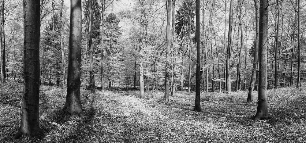 Wald Panorama im Frühling - Fineart Photography