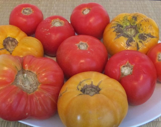 tomatoes, how to use and store tomatoes