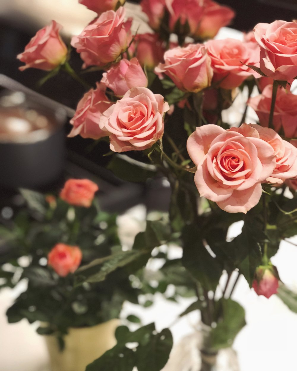 Spray Roses via Trader Joe's $4.99