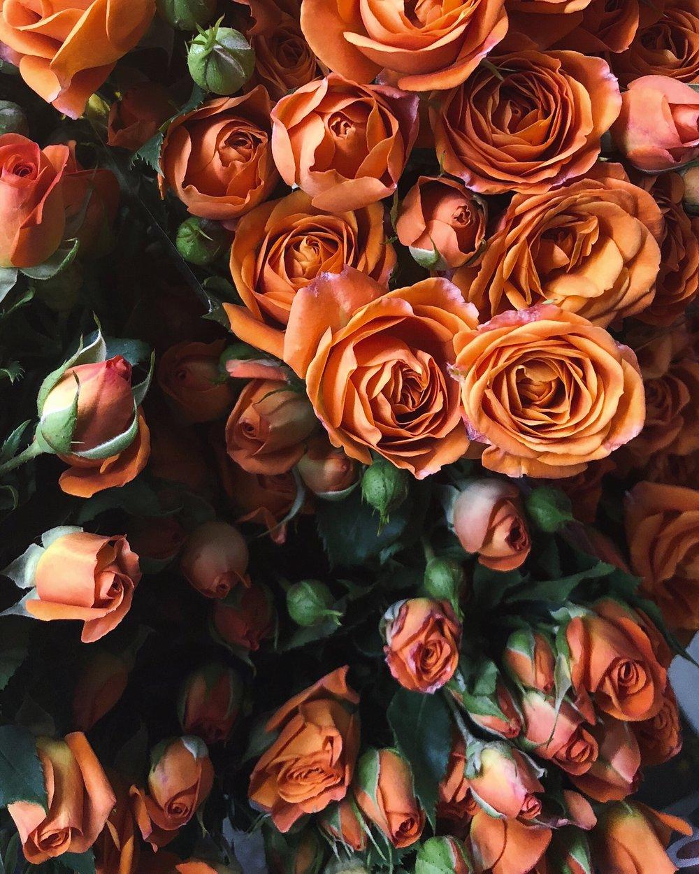 Roses: DTLA Flower District $13.99