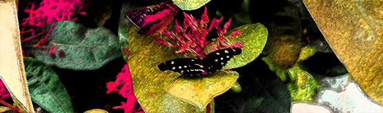Test image for use in website banner design, featuring a couple of butterflies.