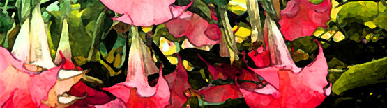 Test image for use in website banner design, featuring some trumpet-shaped flowers.