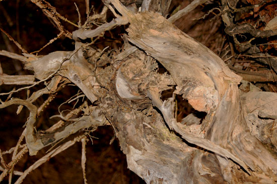 Roots - photo