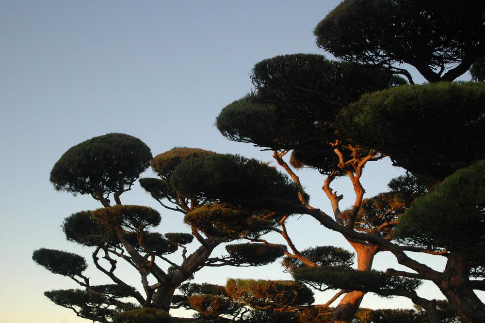 misc-mercer-island-trees.jpg