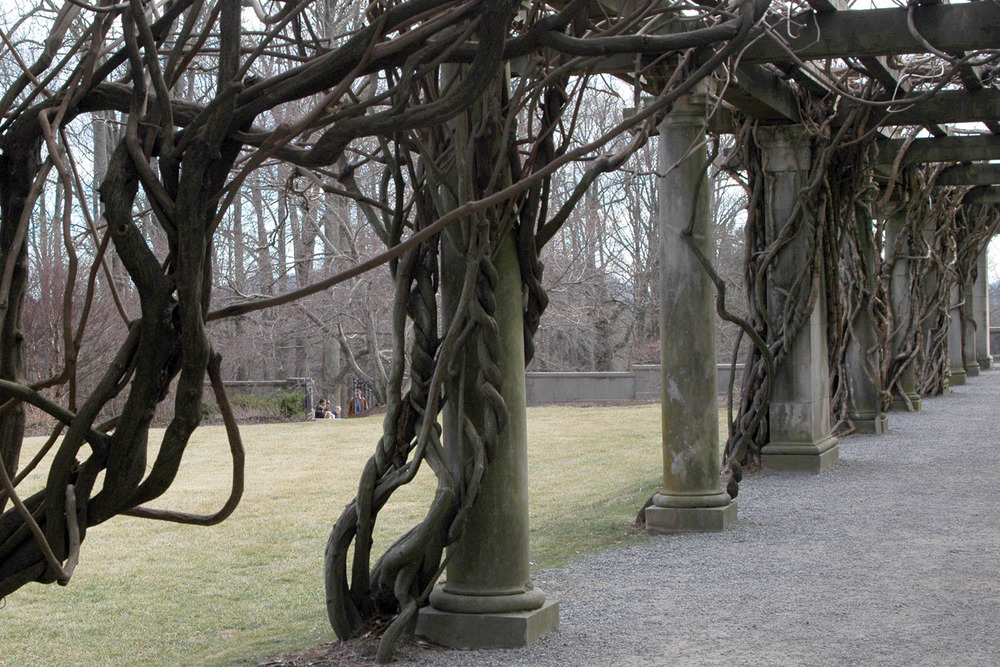 posts-and-vines-at-biltmore-gardens.jpg