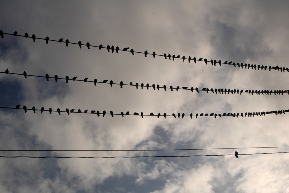 birds-on-wire-01.jpg