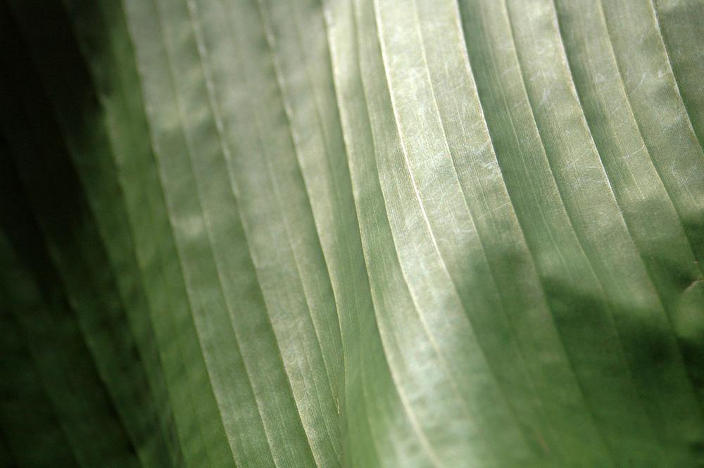 banana-leaf-shoot-01-DSC_6796.jpg