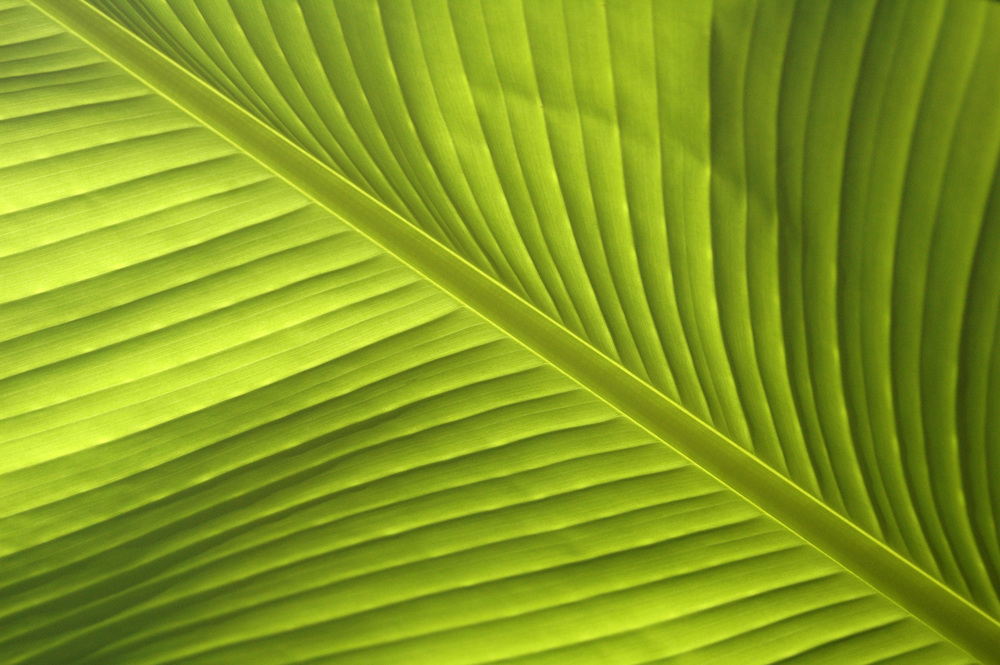 banana-leaf-shoot-01-DSC_6830.jpg