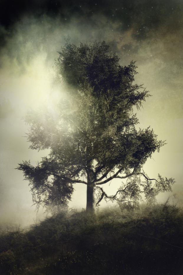 Tree of Tantalus
