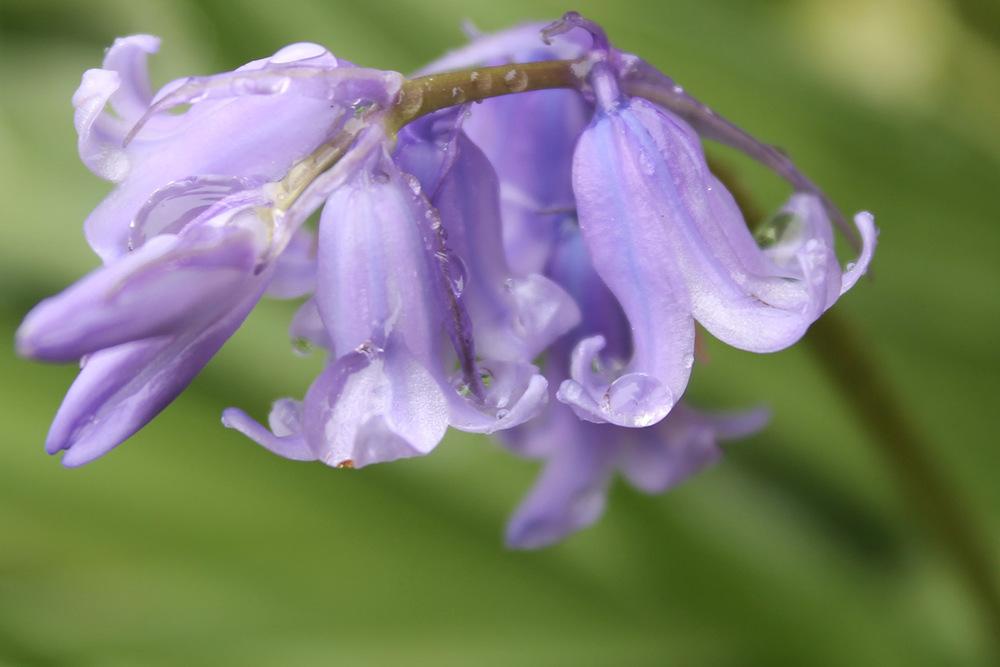 Water on Purple