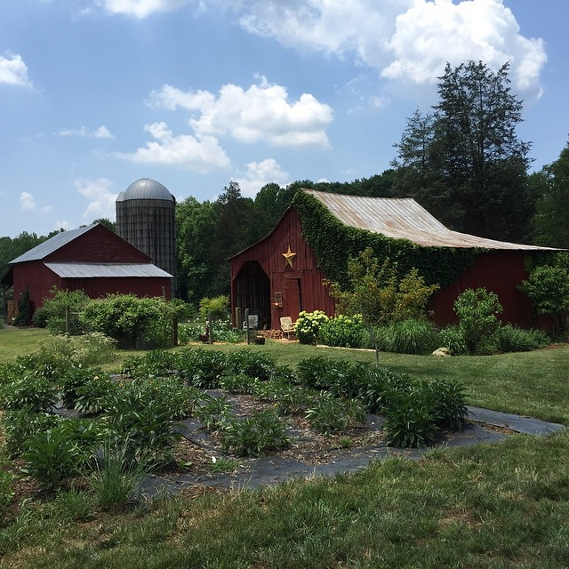 Perfect, gorgeous day at Hauser Creek Farm in Mocksville. Highly recommended if you're looking for something to do and you're in the area. #hausercreekfarm #northcarolina