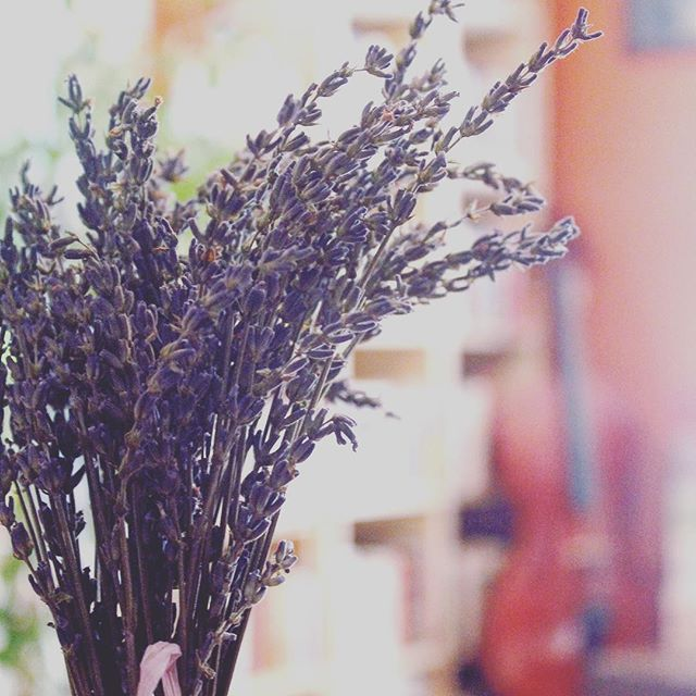 At beginning of our #Squarespace website redesign project, #AletheaSegal brought me a bouquet of dried lavender from @HauserCreekFarm for inspiration. Now, in the final home stretch, the lavender is still inspiring me. What a fun collaboration! #ilovemywork, also #ilovemyclients, #workfromhome, #herbs, #northcarolinafarm, #naturemeetstechnology #website, #V5toV7upgrade
