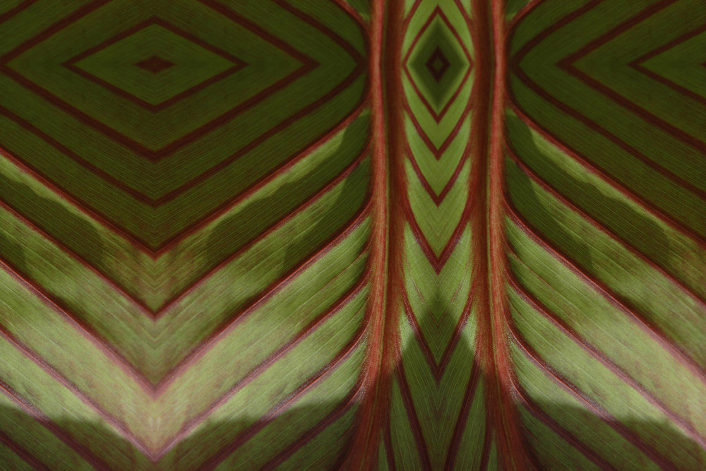 crs-green-red-diamonds-stripes-abstract-pattern-artist-designed-canna-reflections-mirrored-leaf-pattern-website-preview.jpg