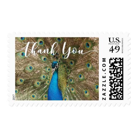 thank_you_with_peacock_face_feathers_1-postage-stamp-photography-and-design-by-melody-watson.jpg