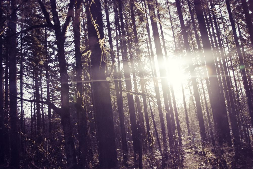01_tree flare.jpg