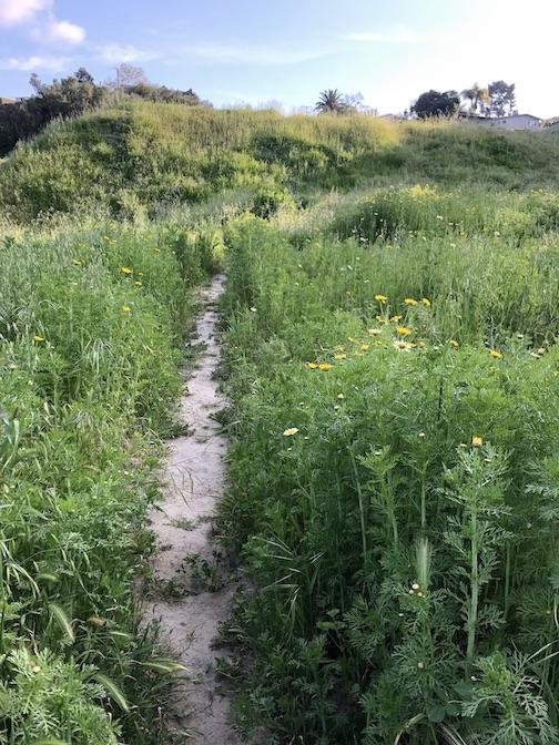 weed trail.jpg