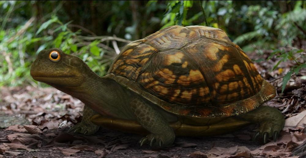 turtle_study_111309.jpg