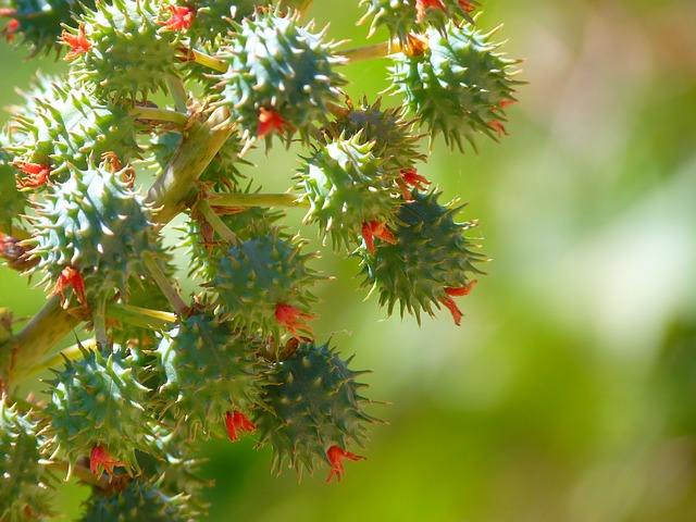 Castor Oil (Ricinus Communis) - Moisturizes and protects hair cuticles. Used often across the world as a treatment for hair loss.