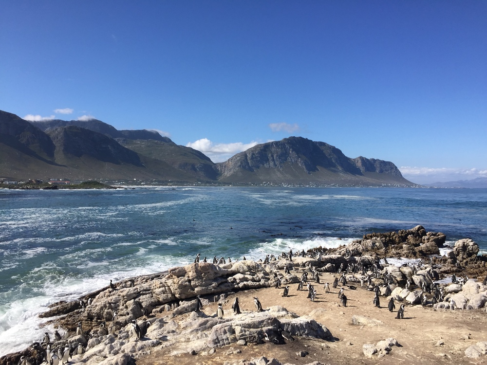 Stony Point in Betty's Bay