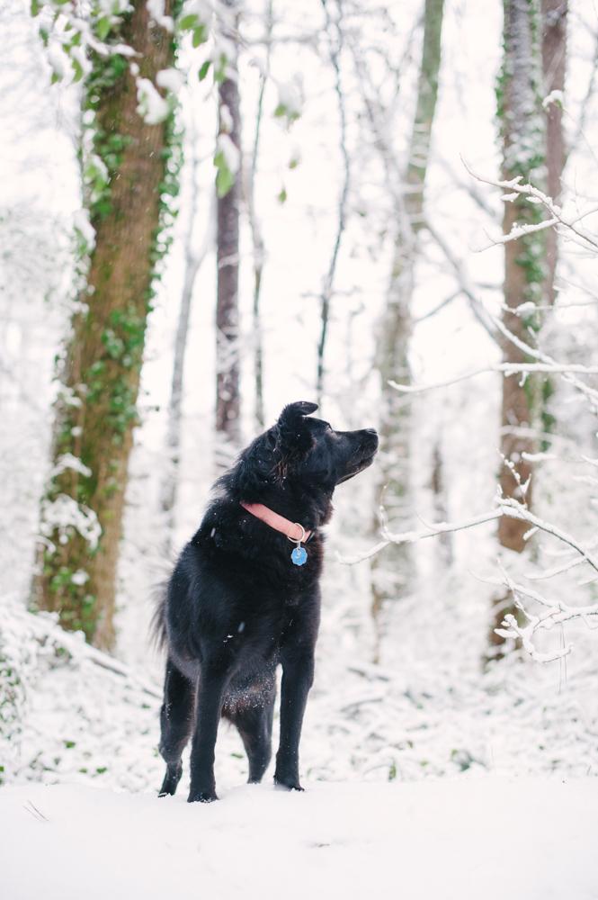 snow-1000.jpg