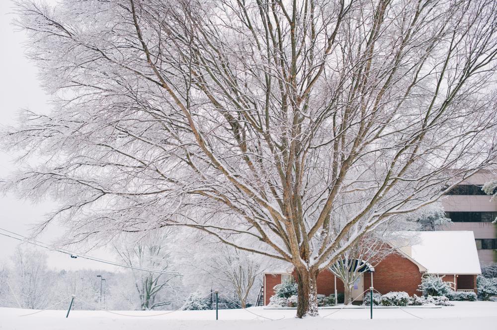 snow-1002.jpg