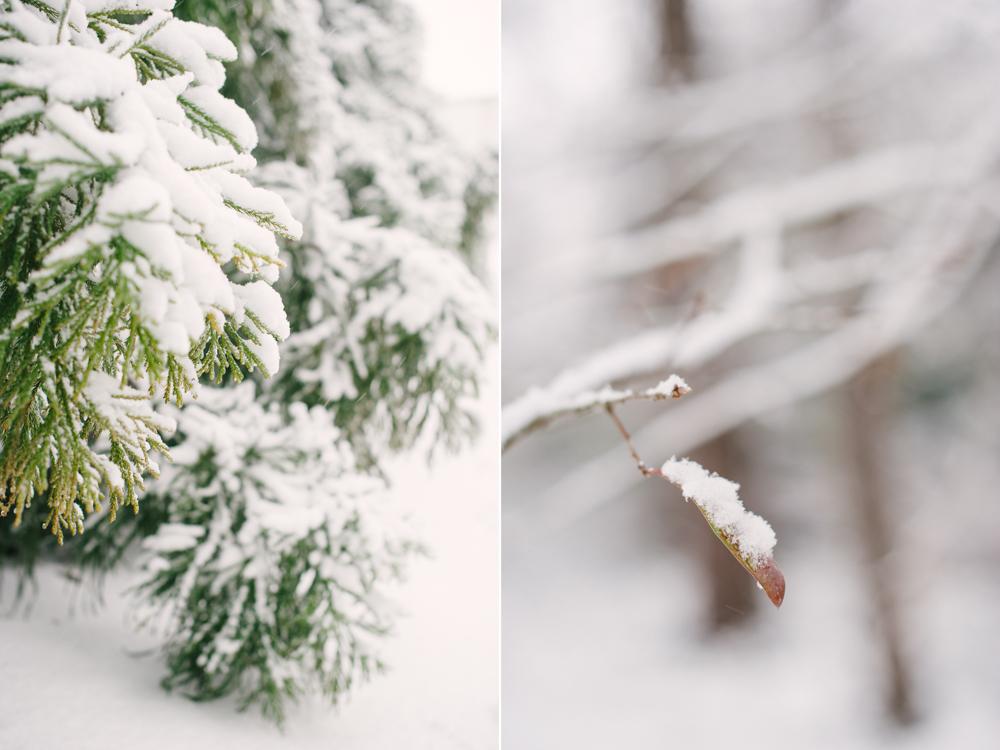 snow-1007.jpg