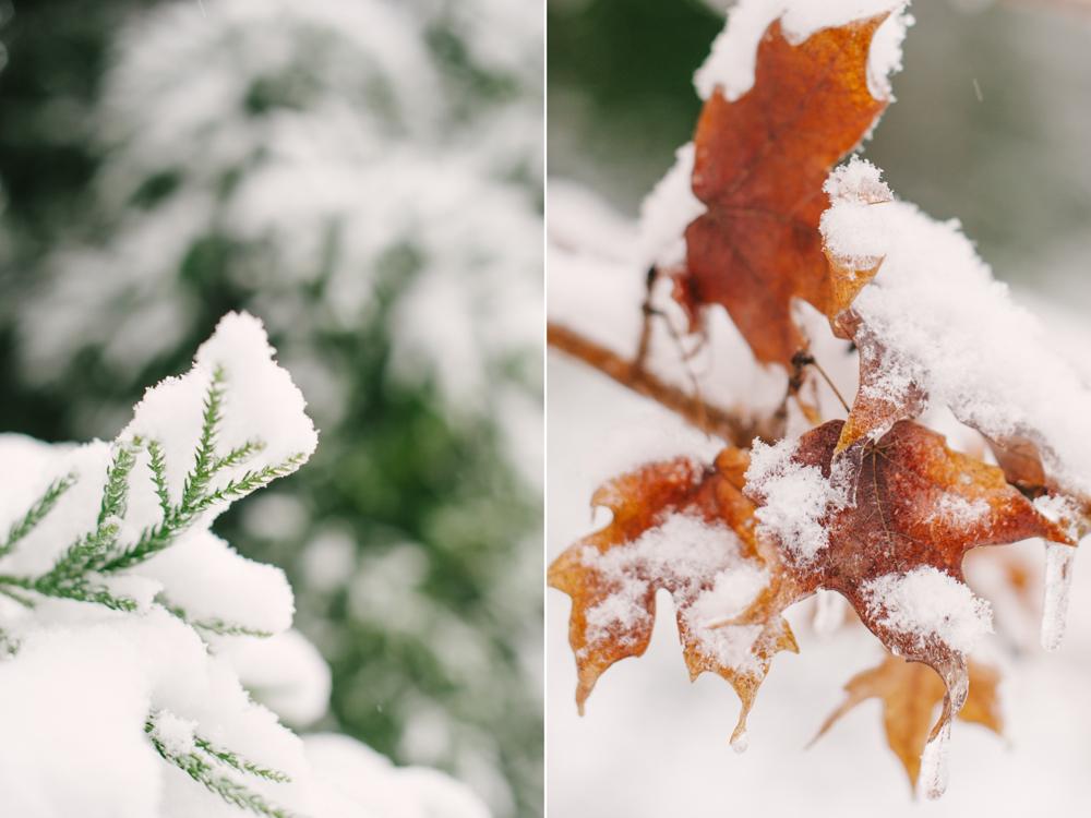 snow-1008.jpg