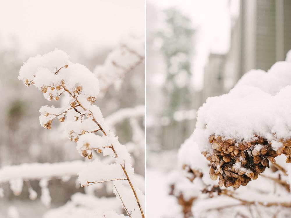 snow-1009.jpg
