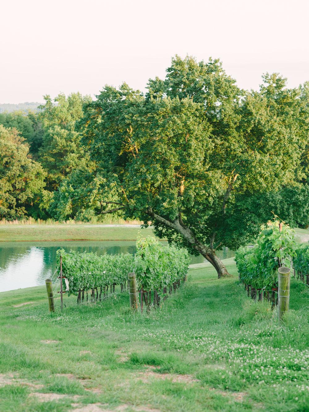Montaluce Winery Wedding-36.jpg