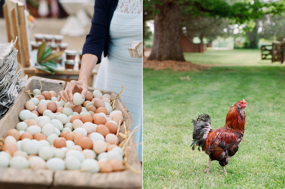 Farm Fresh Eggs as Wedding Favors.jpg