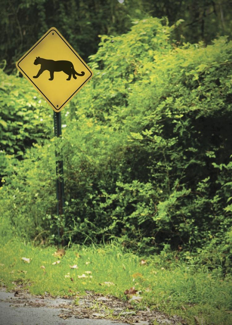 Northshore Cougars