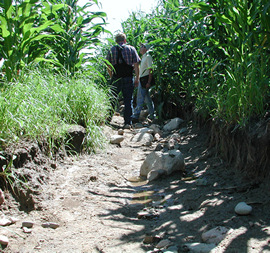 Washington Conservation District staff investigating an erosion issue in a corn field.