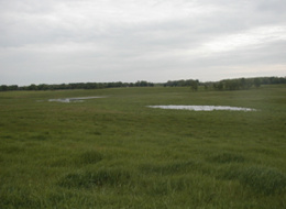 Low spots that are wet in the spring and after heavy rains may be wetlands. A good rule of thumb is that if it is too wet to consistently plant to a farm crop, or you must wait until later in the summer to plant, it may be a wetland.