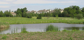 Excavations of wetlands may be permitable if the functional value of the altered wetland is higher than the pre-existing condition.
