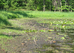Water levels in wetlands can vary seasonally.