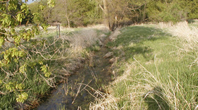 Restoration of the natural hydrology is encouraged for wetland that have been drained.