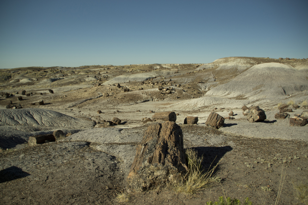 The petrified forest part, Petrified Forest National Park.