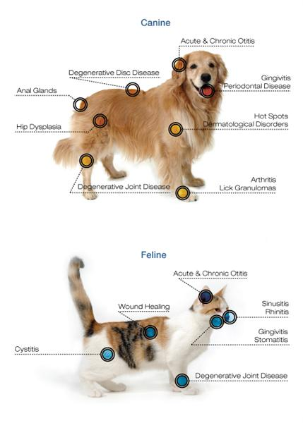 laser therapy diagram.jpg