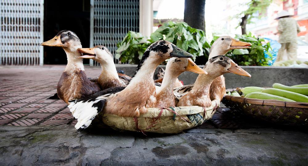 Reisfotografie-Vietnam-003.jpg