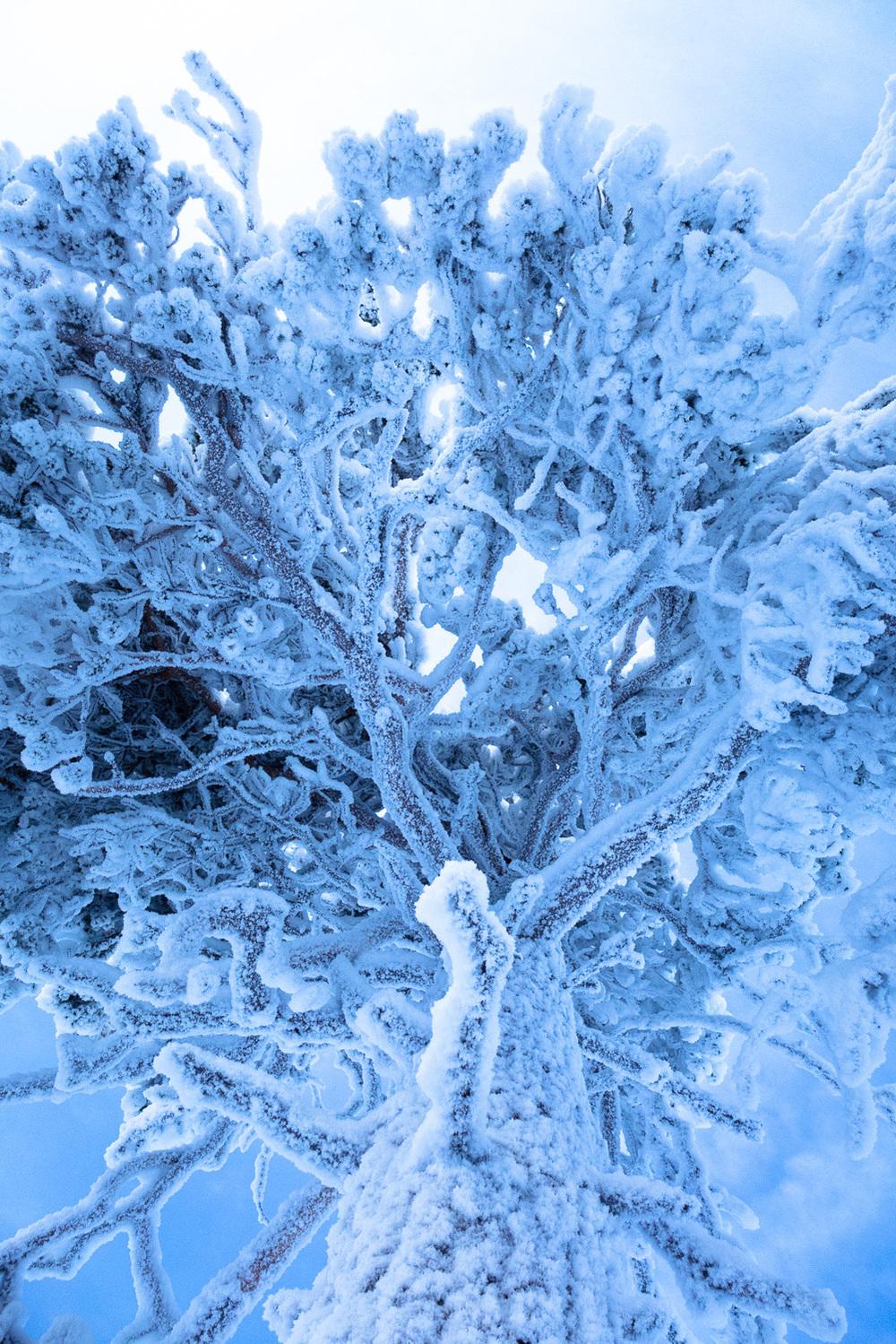 Lapland-015.jpg
