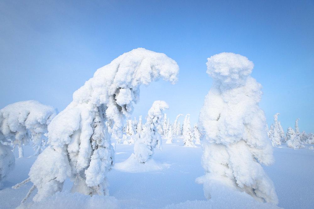 Besneeuwde bomen in Fins Lapland. Hier was het ongeveer -30.