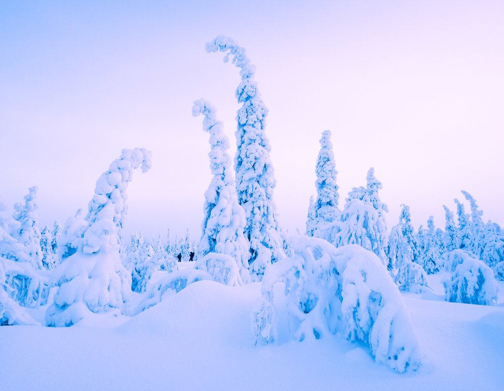 Lapland-_DSC2661.jpg