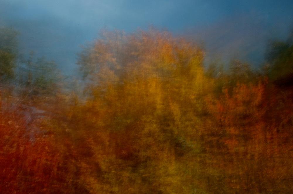 foliage_blur_02.jpg