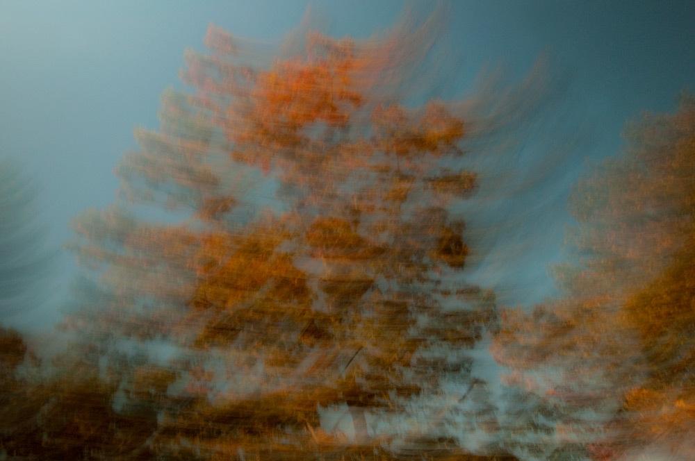 foliage_blur_01.jpg
