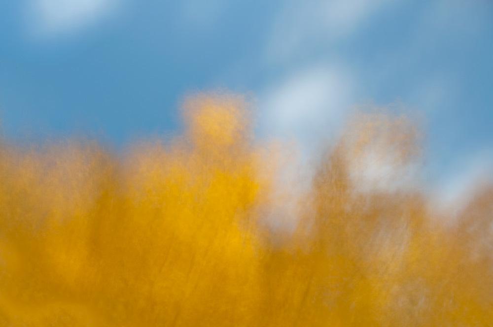 foliage_blur_03.jpg