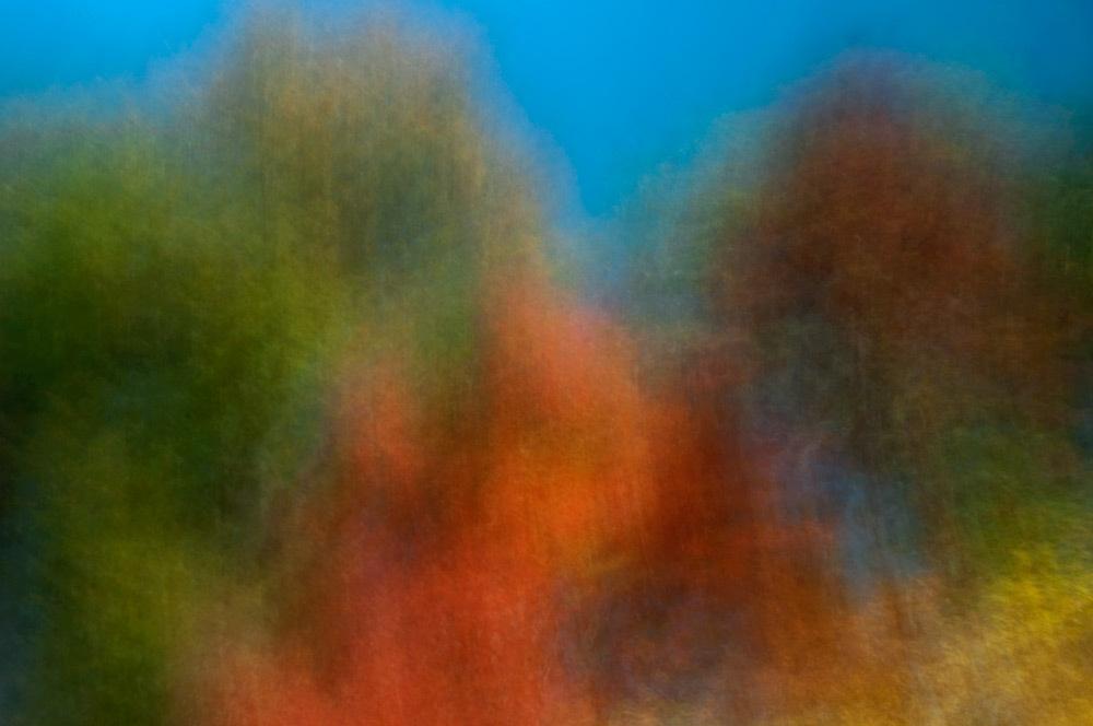 foliage_blur_05.jpg