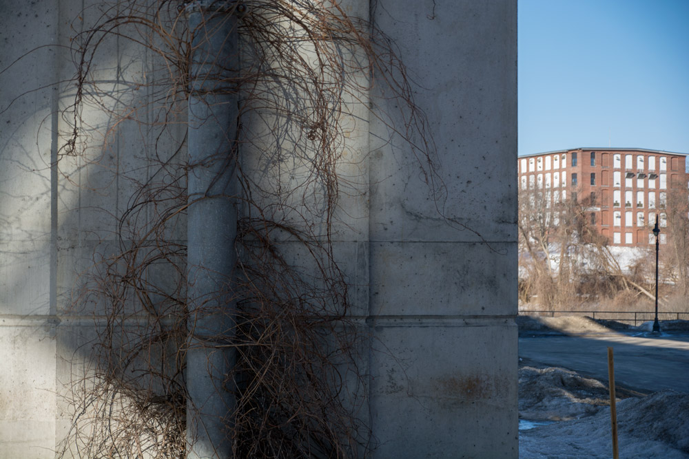 bridge_vines.jpg