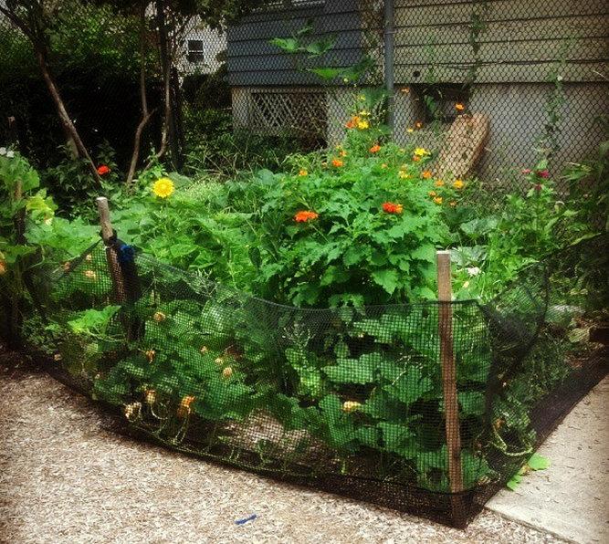 Garden at JP.jpg