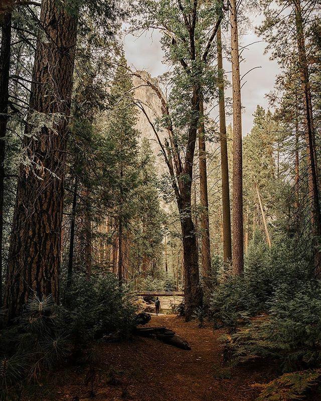 Into The Woods ↟↟↟ Yosemite National Park • • • • #folkgreen #redwoods #redwoodforest #thattravelblog #travelstoke #lonelyplanet #worlderlust #earth_deluxe #departedoutdoors #awesupply #thevisualscollective #redwoodnationalpark #redwoods #roadtrippin #artofvisuals #worldcaptures #travelawesome #intothewoods #createcommune #fairytail #redwood #explorecalifornia #westcoast_exposures #GearedNomad #WildernessCulture #LifeOfAdventure #CreateExplore #EarthFocus #VisualsOfLife #yosemitenationalpark